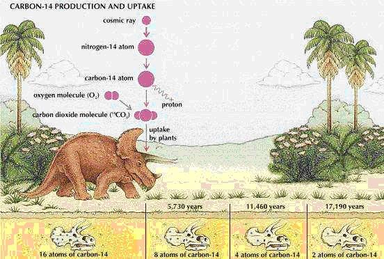 carbono 14 dinosaurios