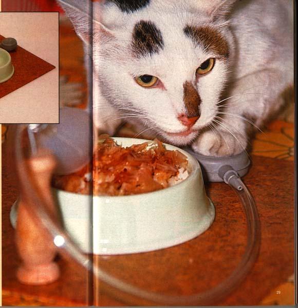 chindogu alimentador felino