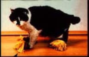 chindogu mopa felina