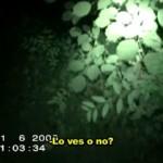 La misteriosa criatura nocturna