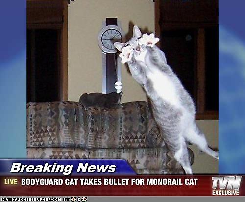 fotografias fotos humor gato guardaespaldas