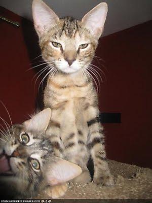 fotografias fotos humor gato inesperado