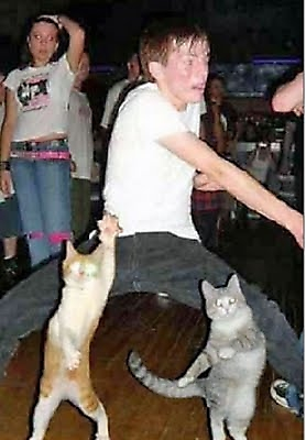 fotografias fotos humor gatos bailando