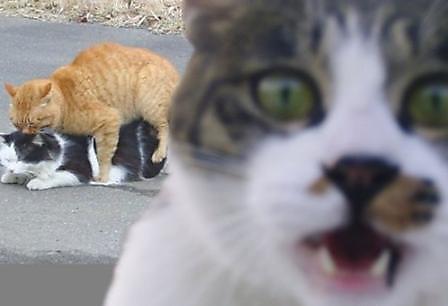 fotografias fotos humor gatos copulando