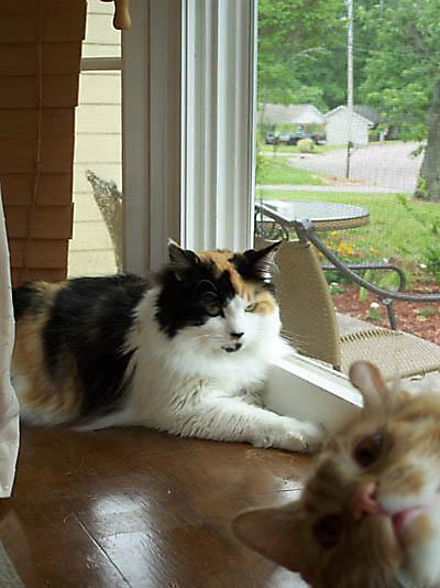 fotografias fotos humor gatos