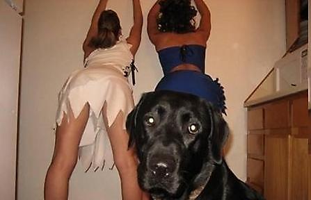 fotografias fotos humor perro chicas