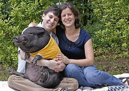 fotos familias raras cerdo