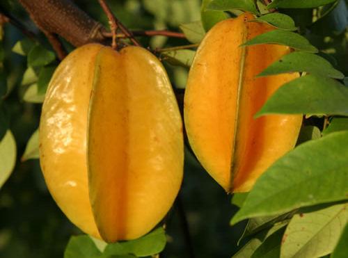 fruta desconocida