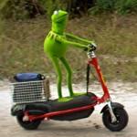 kermit-scooter-rana-gustavo