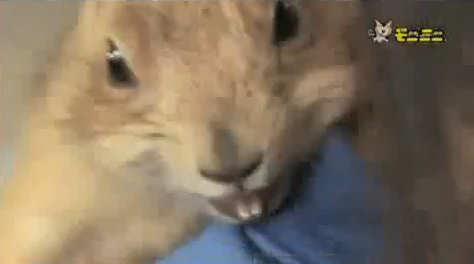 perrito praderas dramatico parodia ardilla