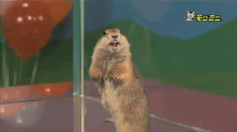 perrito praderas dramatico parodia dientes