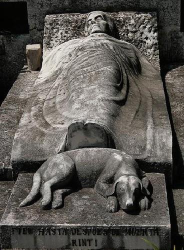 perro dueno muerto