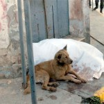 Perro vela a su dueño asesinado
