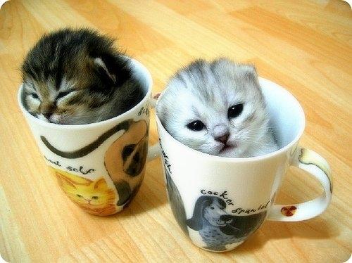 animales adorables gatitos