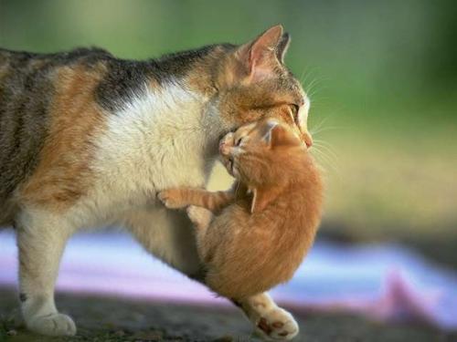 animales adorables gato cachorro madre