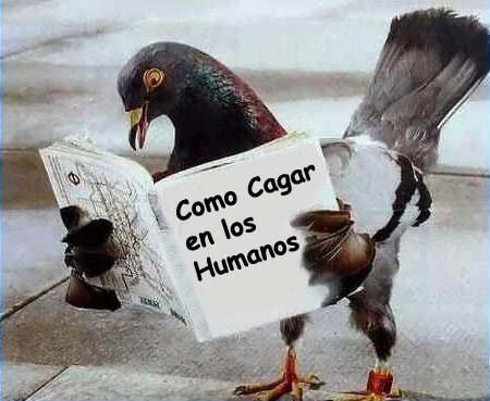 como-cagar-humanos-paloma