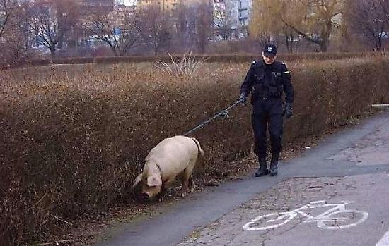 fail-errores-policia-policial-humor