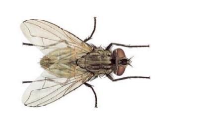 fly-mosca-vuelo