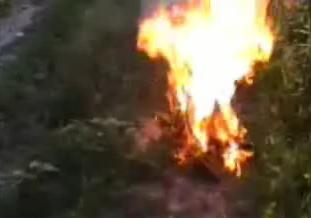 gato ardiendo vivo