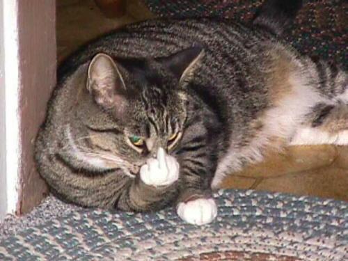 gato corte dedo humor gracioso