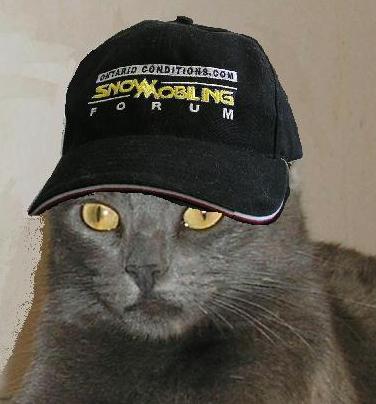 gato humor dj risa imagen