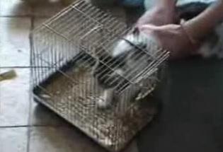 gato quemado vivo