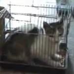 Las crónicas de Morbo: Queman vivo a un gato encerrado en una jaula