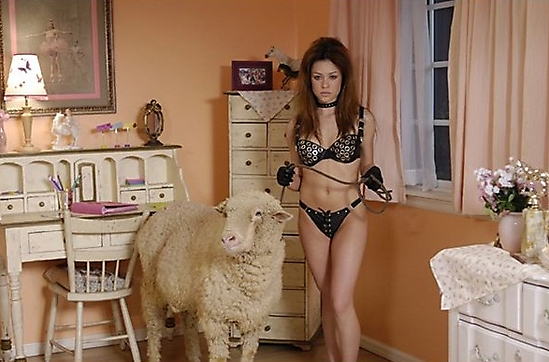 imagenes wtf raras humor oveja mujer