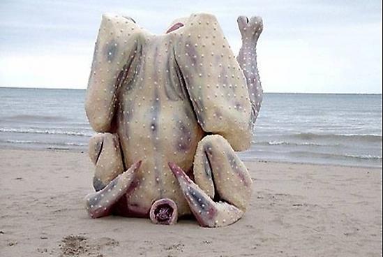 imagenes wtf raras humor pollo playa