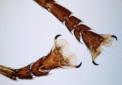 mosca-patas-imagen-detalle