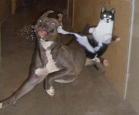owned-gato-perro