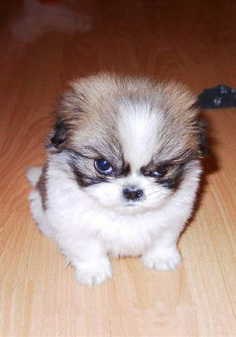 perro-destructor