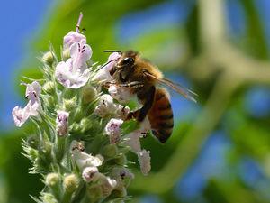 polinizacion abejas