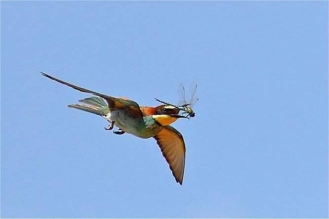 animales-comer-comiendo-pajaro-libelula