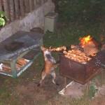 animales-comer-comiendo-perro-barbacoa
