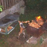 Animales a punto de comer