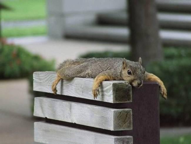 animales-simpaticos-ardilla-cansada