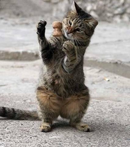 animales-simpaticos-gato-jugando