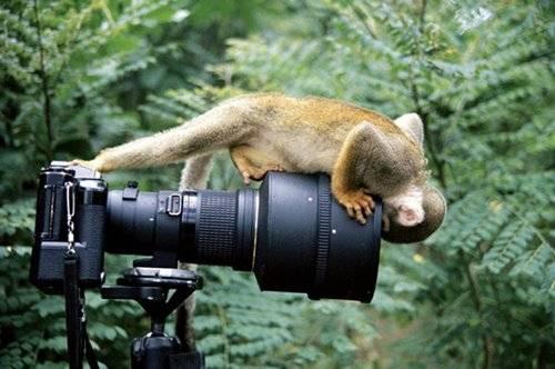 animales-simpaticos-mono-curioso