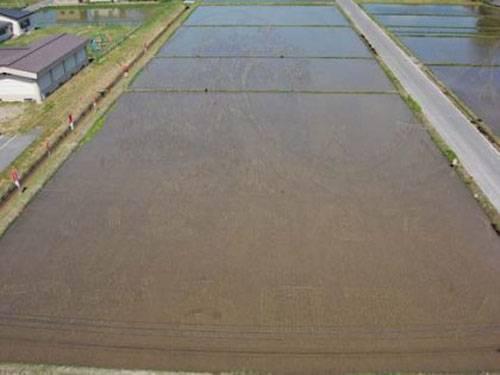 campos-arroz-dibujos-arte-02