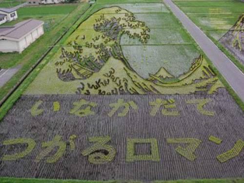 campos-arroz-dibujos-arte-05