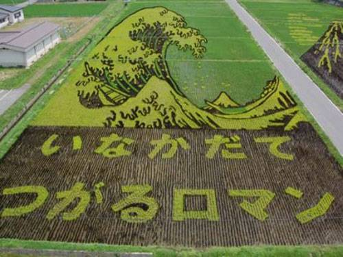 campos-arroz-dibujos-arte-06