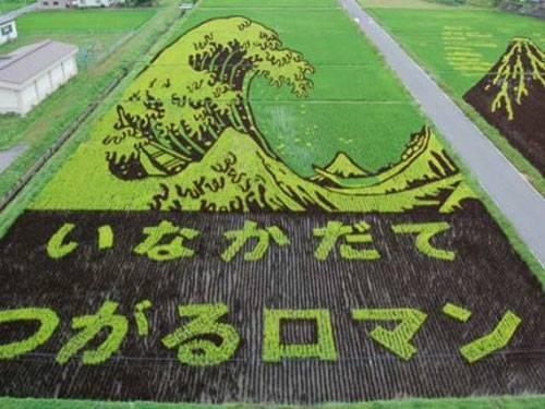 campos-arroz-dibujos-arte-07