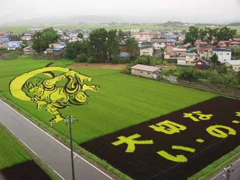 campos-arroz-dibujos-arte-21