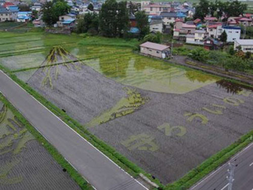 campos-arroz-dibujos-arte-23