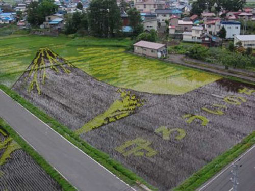 campos-arroz-dibujos-arte-24