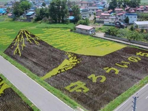campos-arroz-dibujos-arte-25