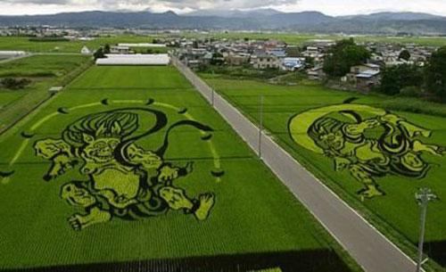 campos-arroz-dibujos-arte-26