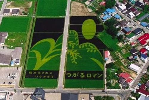 campos-arroz-dibujos-arte-27