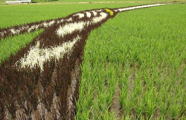 campos-arroz-dibujos-arte-detalle